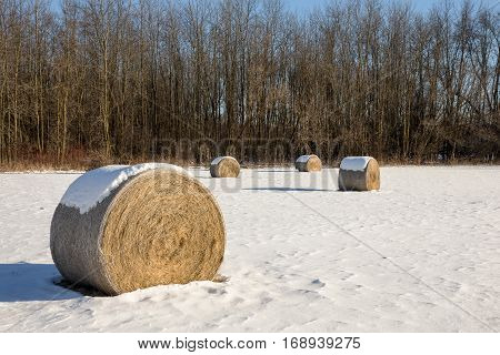 Golden hay bales in a snow covered winter field. Rural landscape with focus on the foreground bale. Trees in the background.