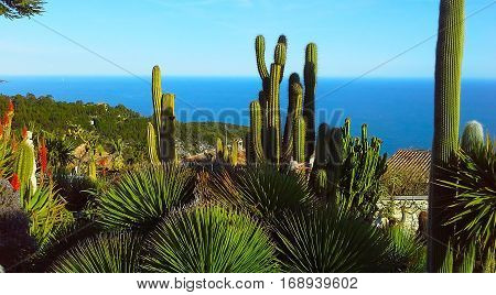 Beautiful view of the village of Eze a botanical garden with cacti aloe. Mediterranean French Riviera