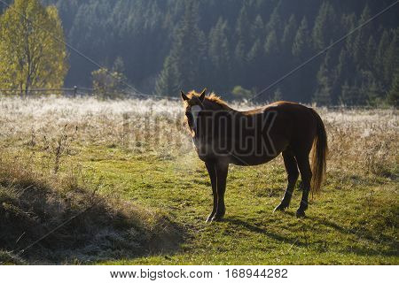 Lonely brown horse in Carpathian mountains in autumn