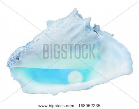 large pearl in light blue shellfish isolated on white background