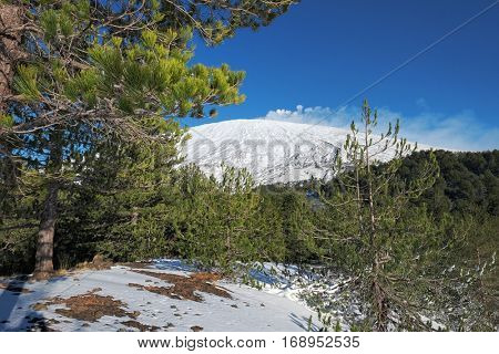 pine forest and snowy Volcano Etna, Sicily
