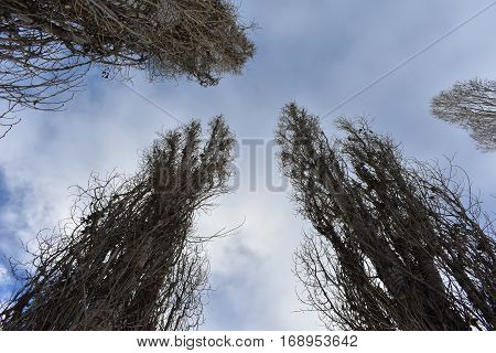 upright trees to reach branches up to the blue sky