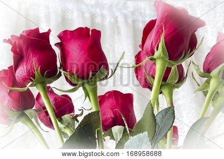 horizontal image of a group of red roses spanning across the whole image with a slight white vignette.