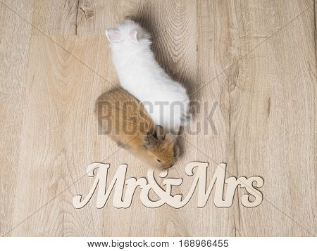 Closeup of two cute rabbits on a wooden background with the inscription Mr. and Mrs.