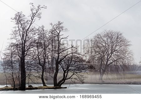 Island with bare trees in a lake and mist on the overgrown shore mystical wetland landscape in the morning light