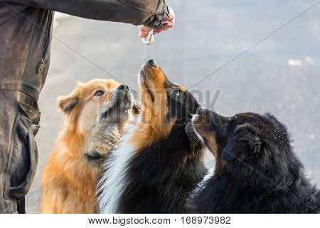 Three Dogs Getting Feed From A Tube
