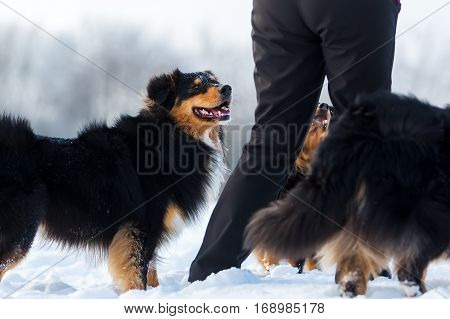 Woman Plays With Dogs In The Snow
