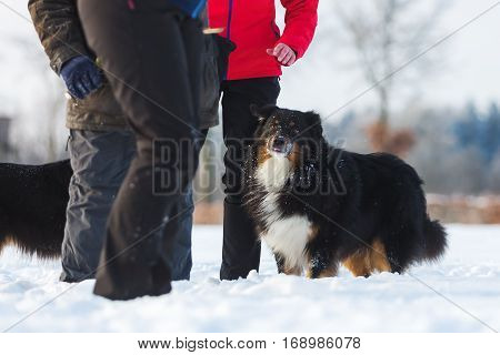 People With A Dog In The Snow