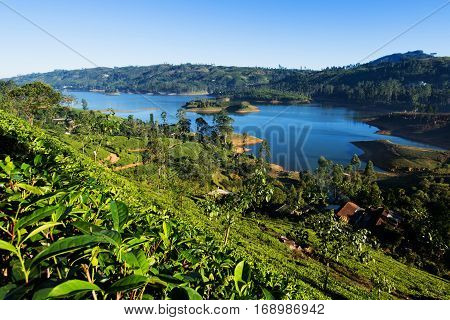 Castlereigh reservoir and surrounded tea plantations in sri lanka