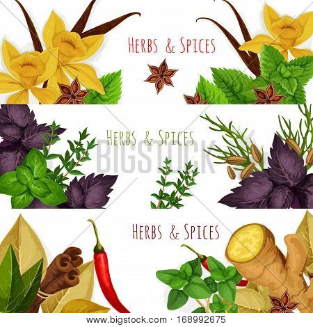 Seasonings spicy herbs or herbal spices condiments. Rosemary and thyme, sage bay leaf, anise and oregano, basil, dill and parsley, ginger, cumin and chili pepper, aromatic vanilla with mint, cinnamon and tarragon. Vector banners set