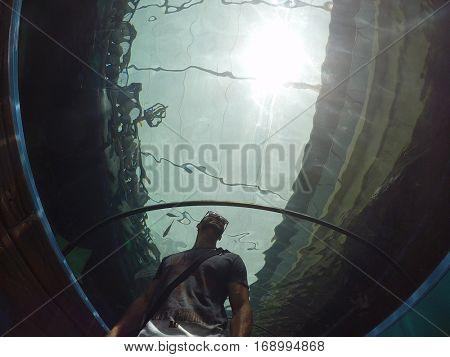 Guy in aquarium tunnel
