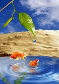 Two playing goldfish in tropical paradise poster