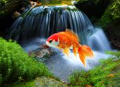 Jumping goldfish in tropical paradise poster