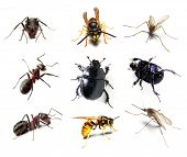 Insect collection on white background poster