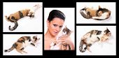 Breeder collection conceptuals images. Cat in different position. poster