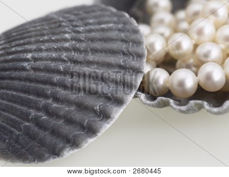 Pearls And Sea Shells