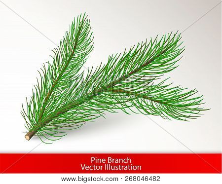 Realistic Green Pine Tree Branch Isolated On White Background. Object And Pine Needle Art Brush For