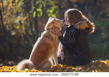 Young Woman On A Walk With Her Dog Breed Akita Inu. Friendship And Love Of Human And Dog