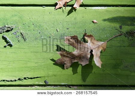 A Fall Leaf On A Wooden Background With Copy Space.