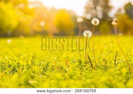 Nature Background Concept. Beautiful Autumn Nature Meadow Background Sunset Light. Bright Inspiratio