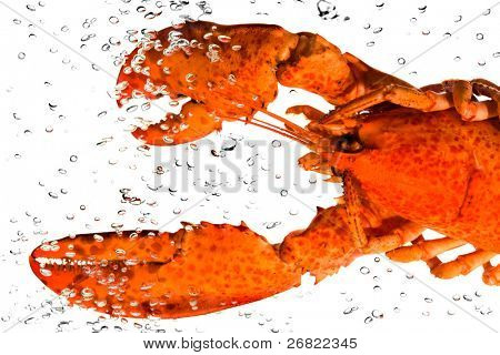 The lobster in water