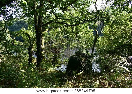 Autumn Colours In The Forest. Oaks, River And Exuberant Vegetation. Trees And Ferns. Galicia, Spain.