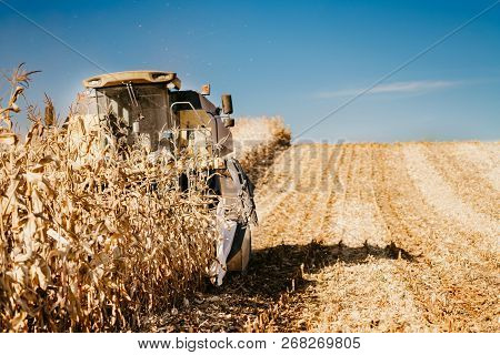 Farmer Working The Fields And Harvesting Corn. Farmer Using Combine Harvester