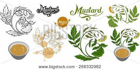 Hand Drawn Mustard Plant, Spicy Ingredient, Mustard Logo, Healthy Organic Food, Spice Mustard Isolat