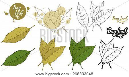 Hand Drawn Bay Leaf, Spicy Ingredient, Bay Leaf Logo, Healthy Organic Food, Spice Bay Leaf Isolated