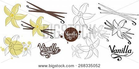 Hand Drawn Vanilla Beans, Spicy Ingredient, Vanilla Flower Logo, Healthy Organic Food, Spice Vanilla