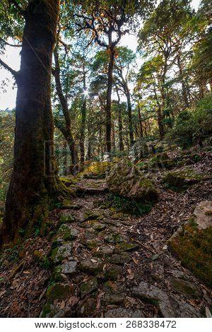 Tree Forest Trek In Himalayas - Khaliya Top Munsiyari, Uttarakhand