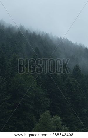 Misty Landscape With Foggy Forest. Mystery Mountain Scenery Or Moody Hipster Background