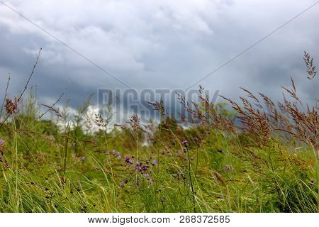 Landscape With Meadow And Blue Sky. Rural  Flowers On A Green Grass. Field With Grass And Wild Flowe