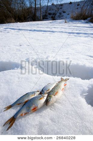 Sunny weather, deep snow and 4 small fishes