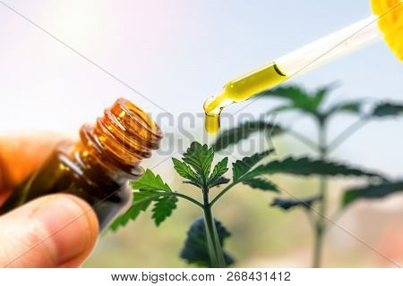 Hand Holding Bottle Of Cannabis Oil Against Marijuana Plant, Cbd Oil Pipette
