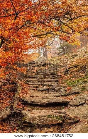 Amazing Colorful Autumn Forest With Stone Stairs
