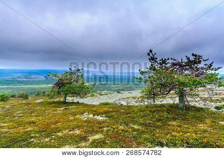 Landscape From The Summit Of Ukko-luosto Fell, In Pyha-luosto National Park, Lapland, Finland