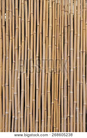 Grouping Of Bamboo To Form Fence