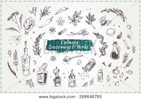 Culinary Seasonings And Herbs. Set Of Sketch Hand Drawn Vector Icons Isolated On White. Doodle Style