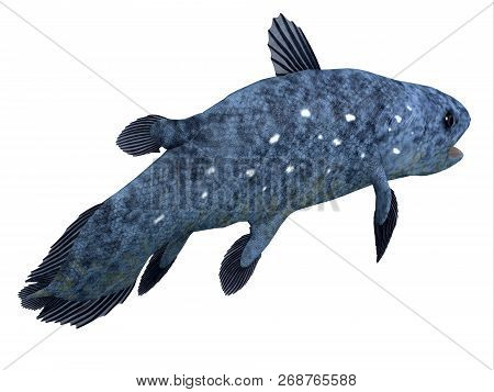Coelacanth Fish Tail 3d Illustration - The Coelacanth Fish Was Thought To Be Extinct But Was Found T