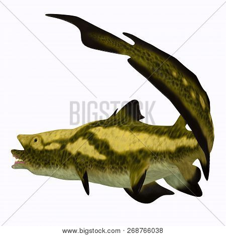 Edestus Shark Tail 3d Illustration - Edestus Was An Early Shark That Lived During The Carboniferous