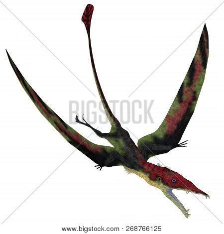 Eudimorphodon Pterosaur Diving 3d Illustration - Eudimorphodon Was A Carnivorous Pterosaur Bird That