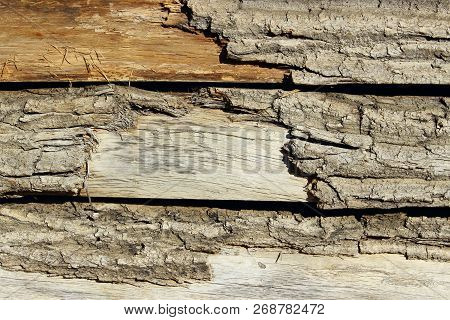 Wooden Texture Background.cropped Shot Of A Textured Background. Tree Texture. Tree Background. Crac