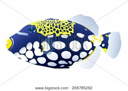 Vector Illustration Of Colored Fish Of A Triggerfish On White Background