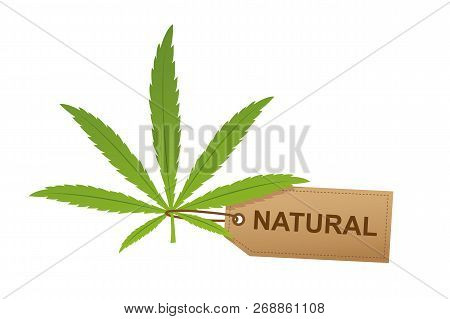 Cannabis Leaf With Natural Label Isoladet On White Background Vector Illustration Eps10