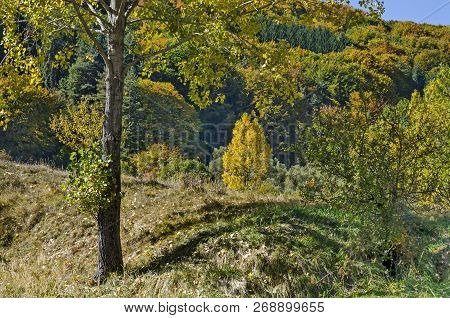 Colorful Autumn Landscape Of Yellow Antumnal Tree Close Up, Coniferous And Deciduous Forest With Gla
