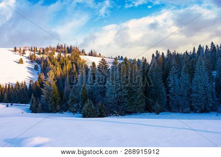 Coniferous Forest On The Snowy Slope At Sunset