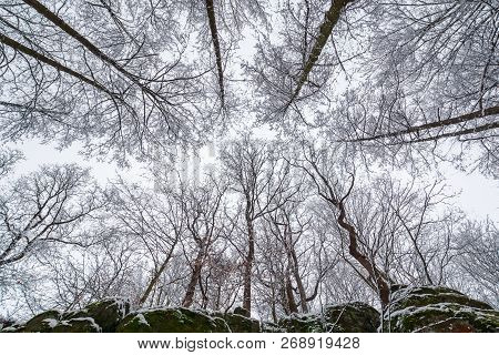 Winter Forest On A Rocky Cliff. View From Below In To The Leafless Tree Crowns