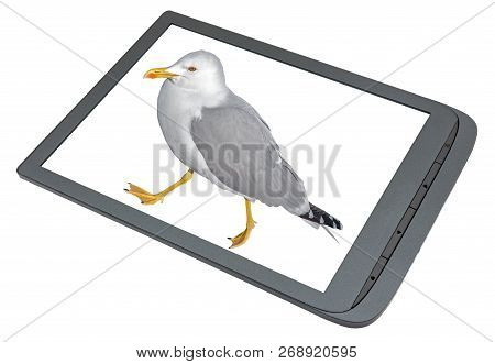 Electronic Book Reader With The Grey Seagull On The Screen On White Background