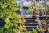 Green and yellow autumn leaves on rusty iron greed poster